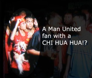 Man United fan with a chi hua hua